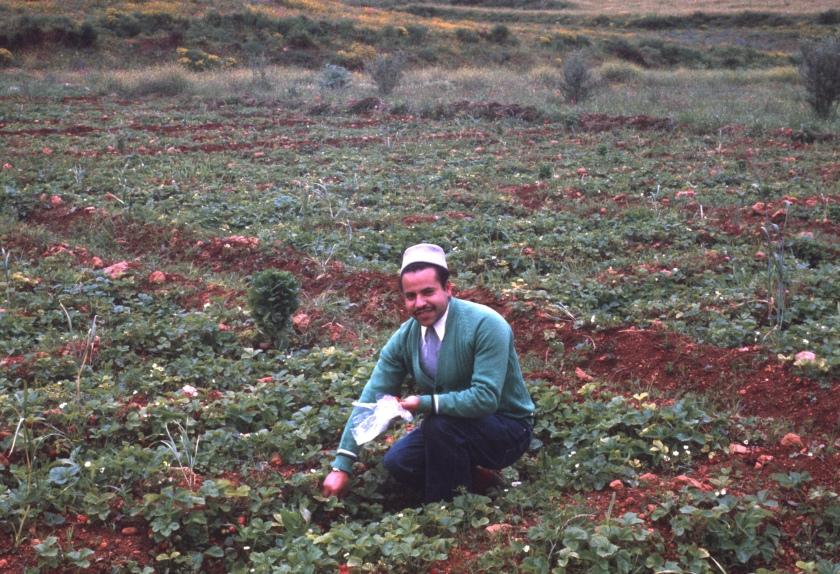 Morocco Sefrou Strawberries copy