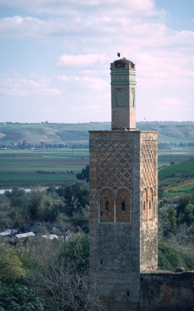 morocco rabat chella minaret stork copy