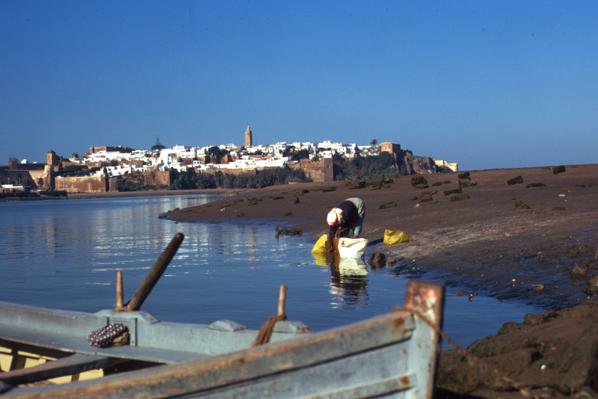 morocco rabat sale ferry copy